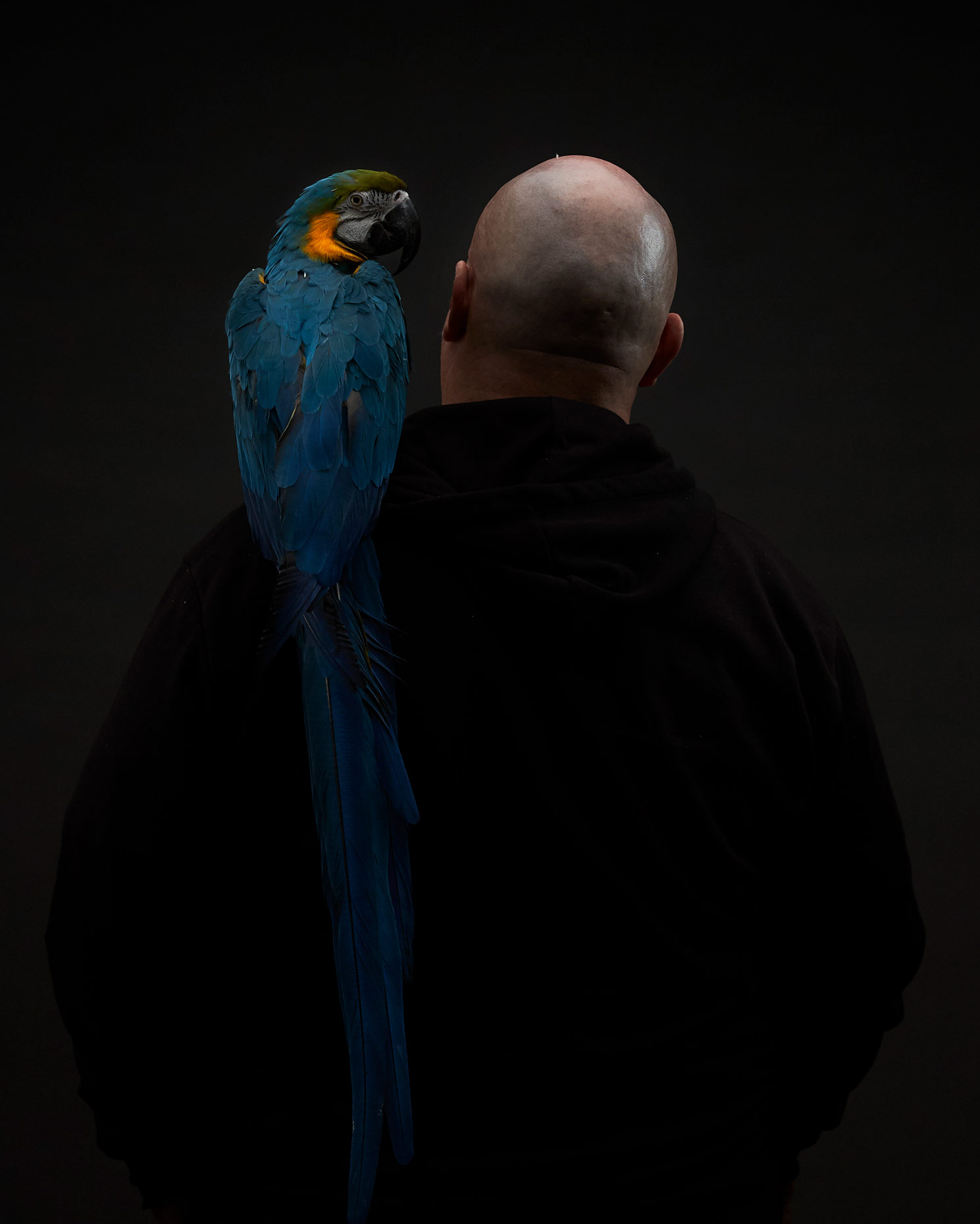 Basil The Macaw