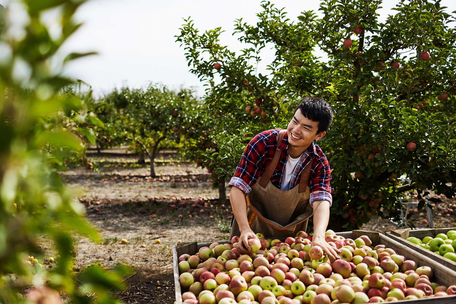 Fair-Work-Orchard-073_R